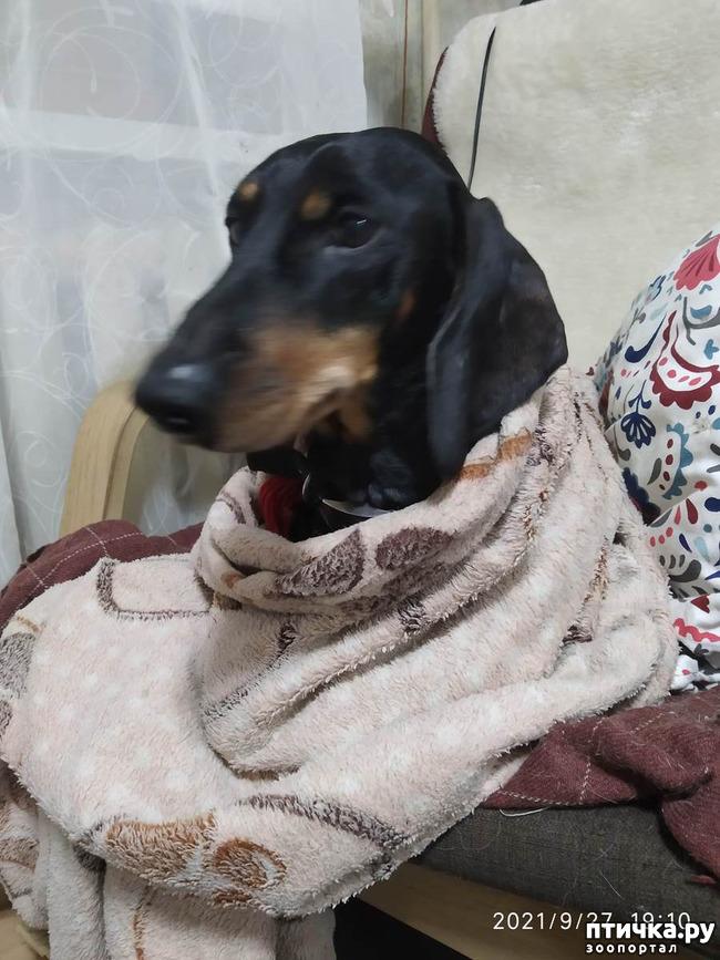 фото 2: Почему собаки глотают несъедобные предметы?