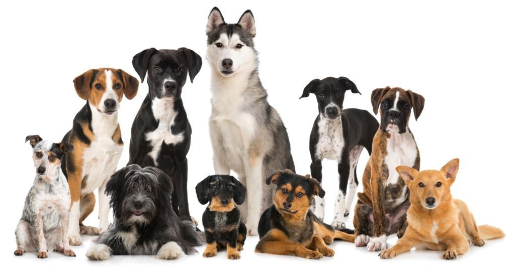 Как выбрать породу собак