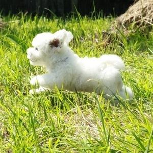 Бишон фризе - щенок
